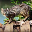 chat balustrade com animale