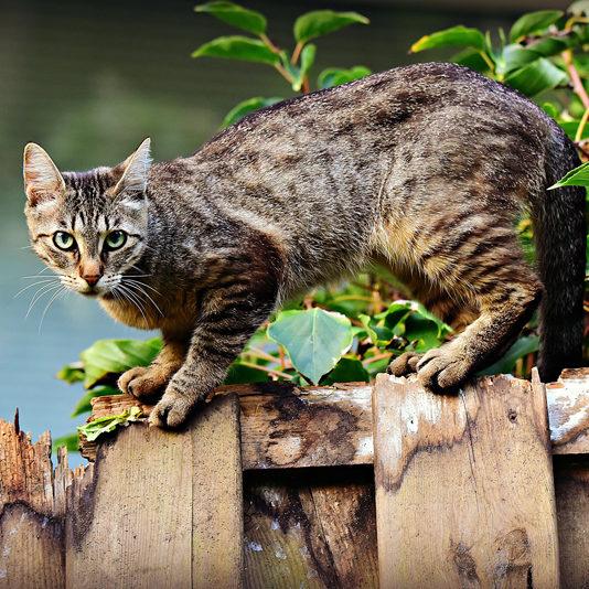 chat qui suis je pascale feltrin