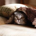communication animale chat cache