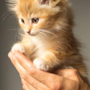 chat main com animale