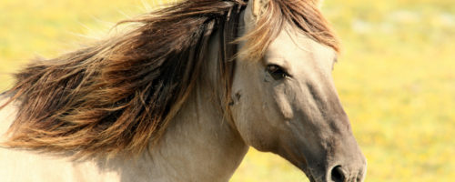 cheval travail mémoire comanimale