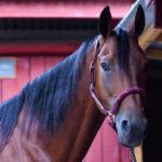 Communication animale cheval écurie