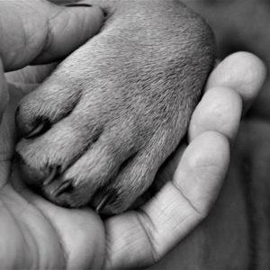 chien patte main NB-800