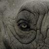 communication animale éléphant