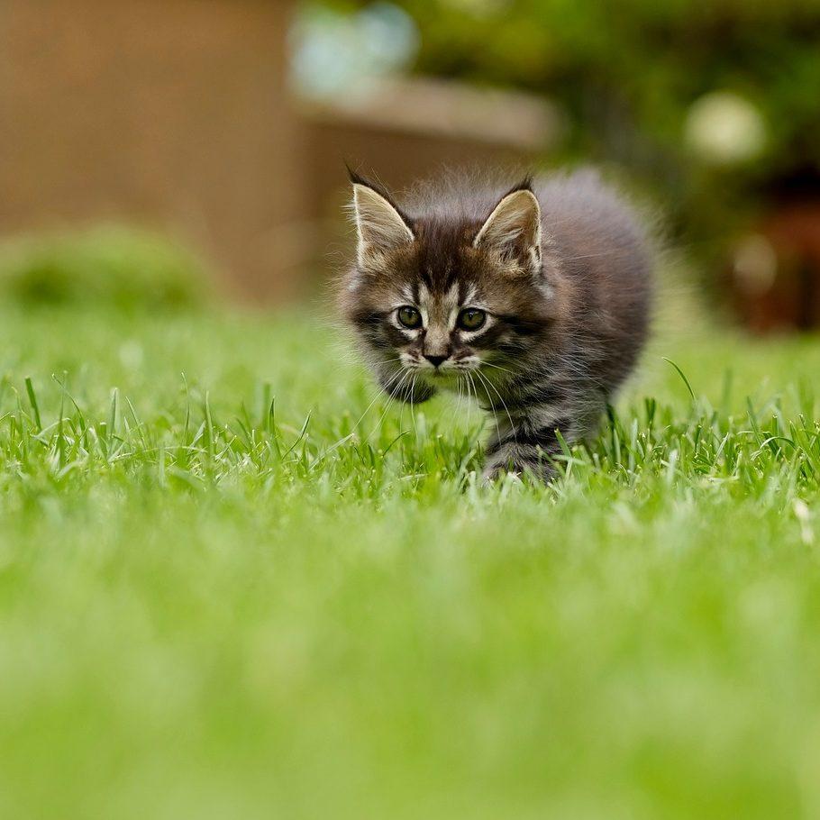 chaton qui suis je pascale feltrin