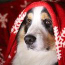 chie Noel com animale
