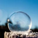 bulle givre com animale