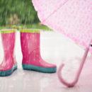 pluie com animale