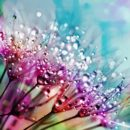 fleur arc en ciel